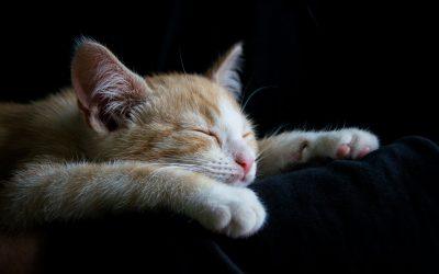 Kotki i kociaczki Dziewczynki i chłopaczki.