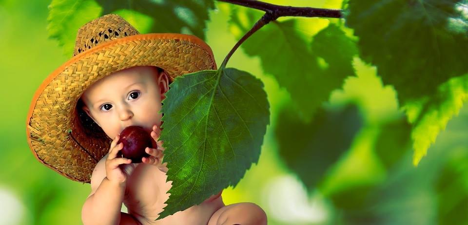Owocowy raj, witaminek kraj!