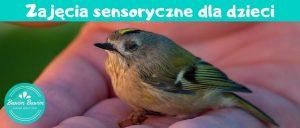 Zajecia sensoryczne