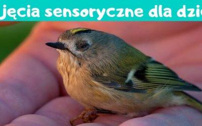 Zima, zima, zima – zajęcia sensoryczne dla dzieci.
